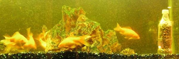 bottle-aquarium-388.jpg